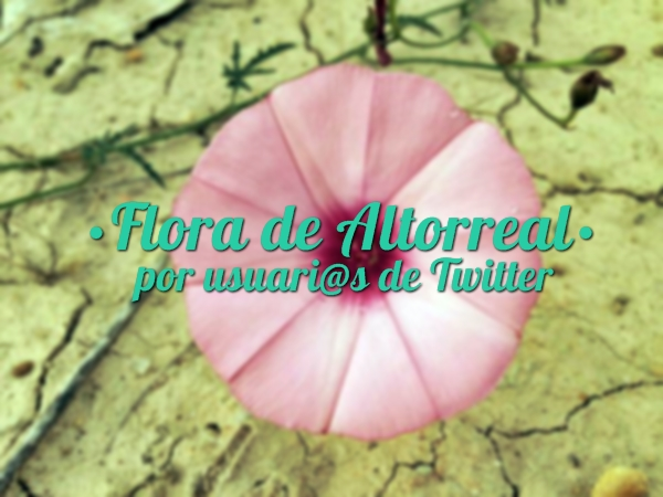 Flora de Altorreal