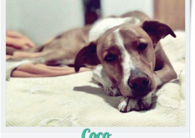 COCO Ana Masegosa