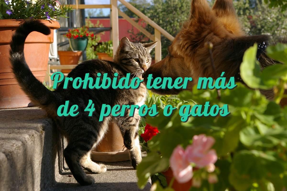 Prohibido tener más de 4 perros o gatos