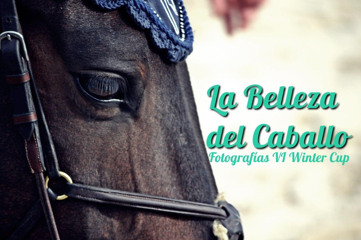 La belleza del caballo
