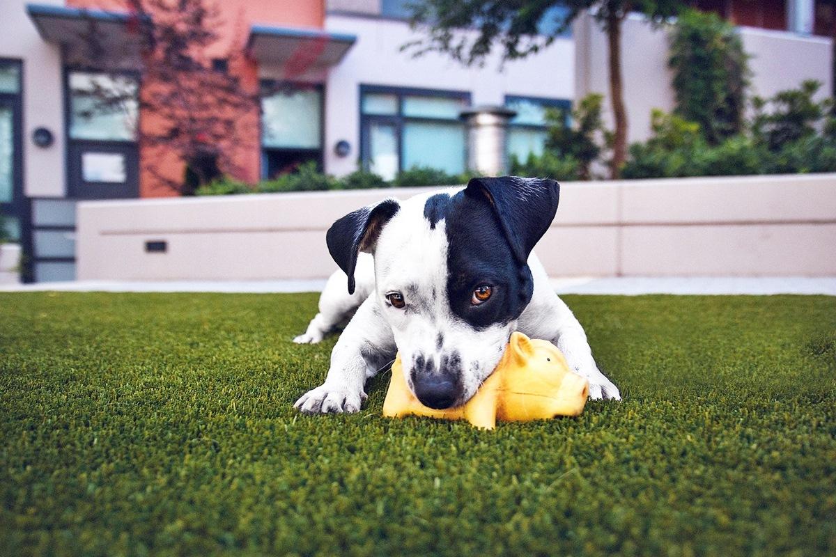 Última alerta: ladrones de perros