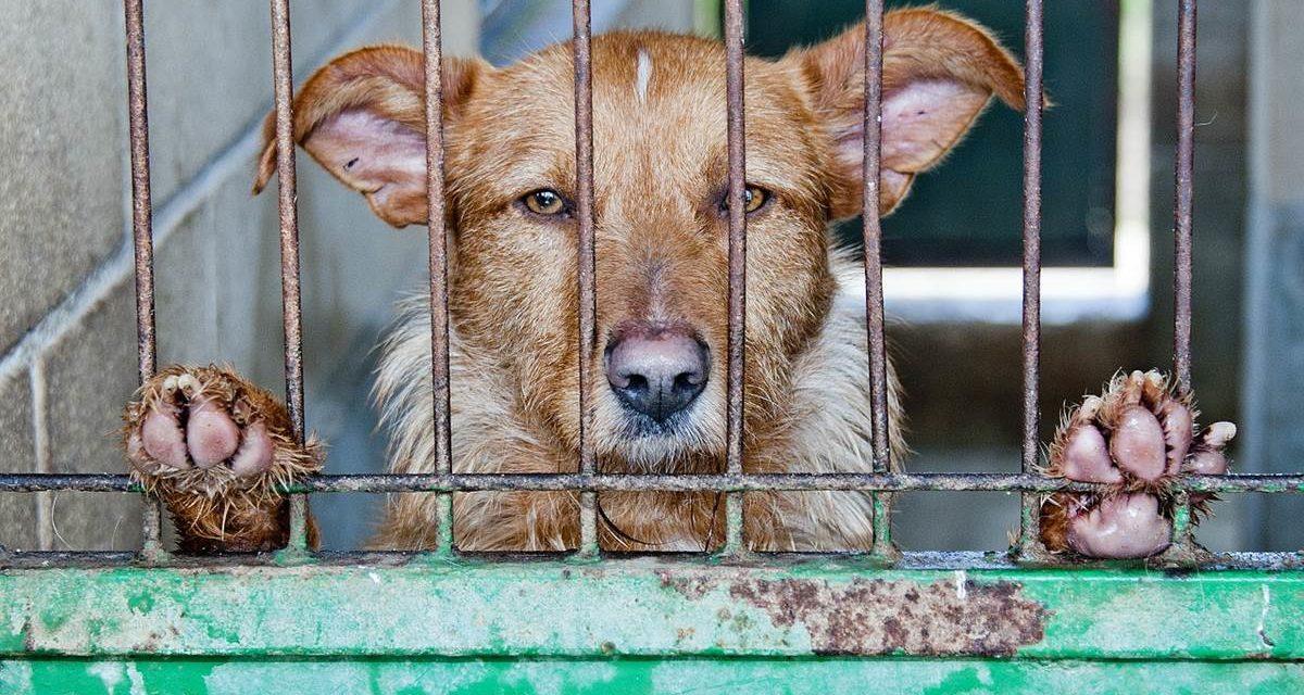 Campaña contra el abandono de animales