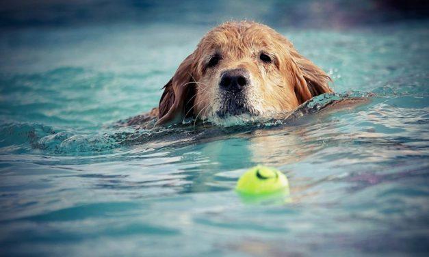 Cuidados de tu perro ante el calor