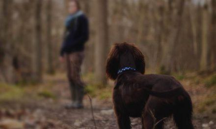 La Policía Local vigilará de paisano la recogida de excrementos de mascotas