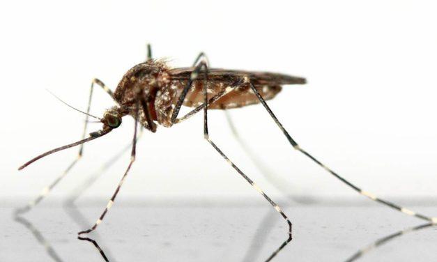 Campaña contra el mosquito tigre