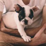Los problemas de salud de los bulldogs franceses: otitis, diarreas y conjuntivitis