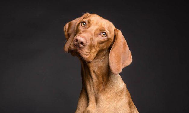La equivalencia entre un año de perro y siete humanos es un mito: descubre la correspondencia real