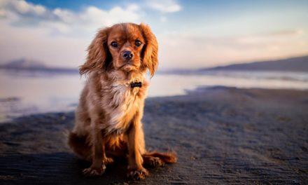 Nueve razones para proteger a tu perro de la leishmaniasis