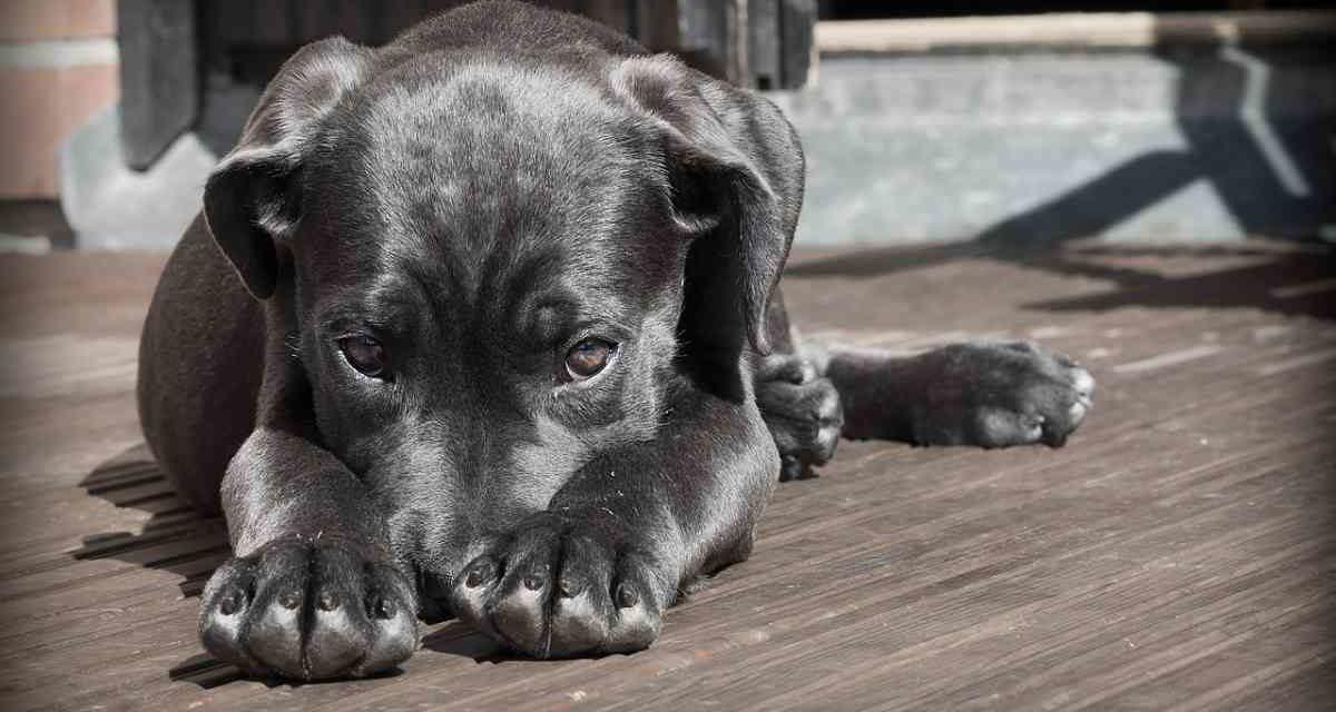 Un fármaco para que los perros no pasen miedo con los fuegos artificiales