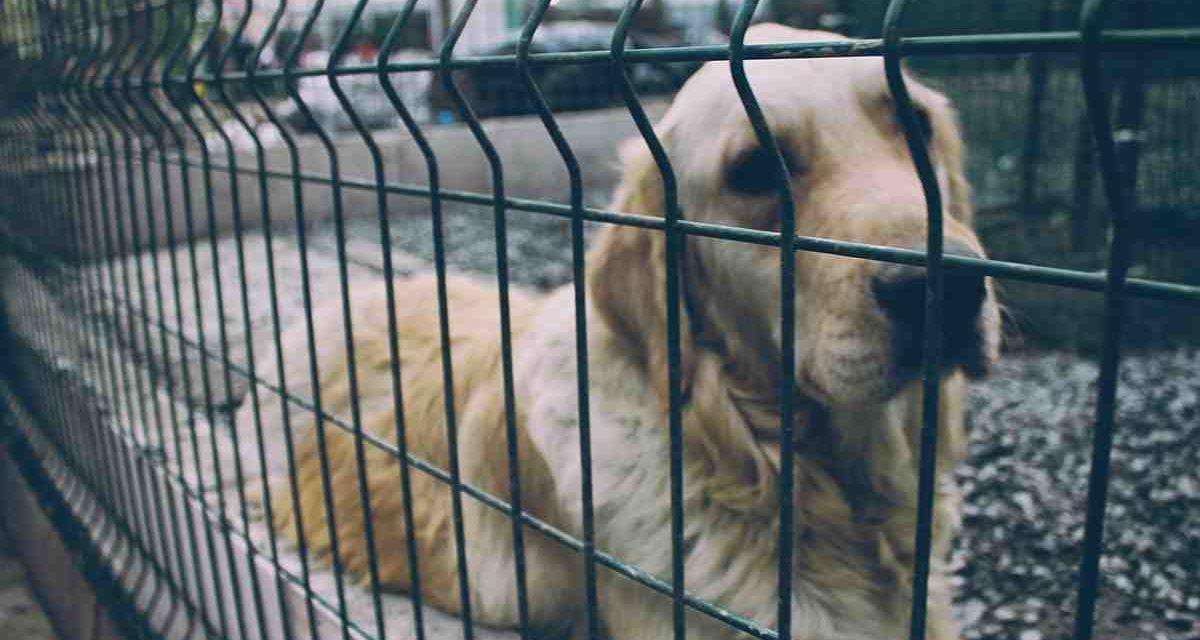 Siete razones para adoptar un perro de protectora