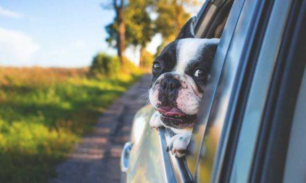 Cuatro claves para irte de vacaciones con tu mascota