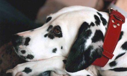 Cómo elegir el collar y la correa para tu perro