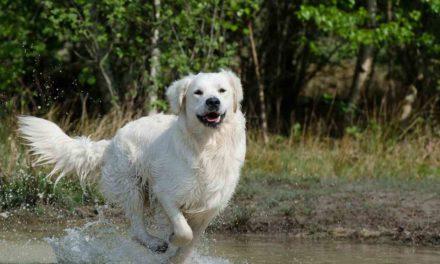 Los ocho grandes peligros para la salud de tu perro en verano