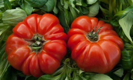 5 alimentos adecuados para pasar la ola de calor y otros 5 que mejor no