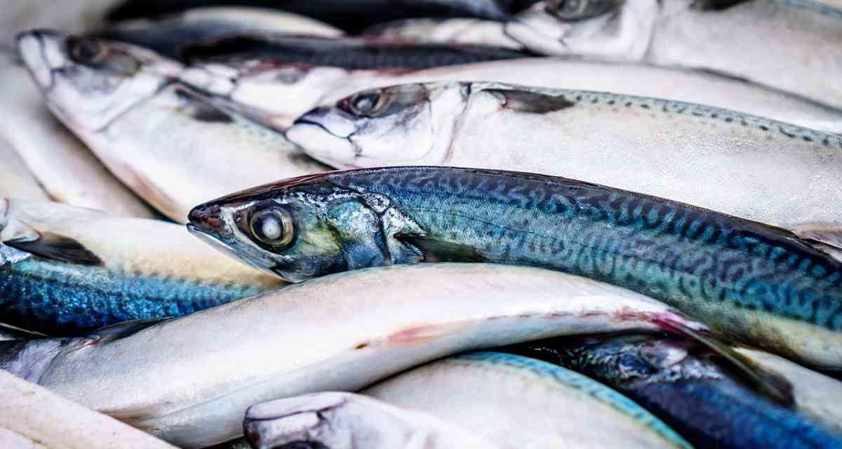 Siete intoxicaciones que puedes sufrir al comer pescado y que no son anisakis