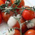 Las nueve claves para reconocer un alimento contaminado