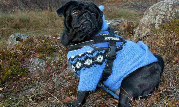 ¿Es aconsejable poner abrigo a los perros?