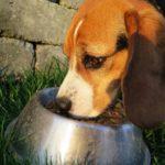 Los preparados de carne cruda para perros contienen altos niveles de bacterias