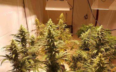 Destrozan un dúplex de Altorreal para convertirlo en un invernadero de marihuana