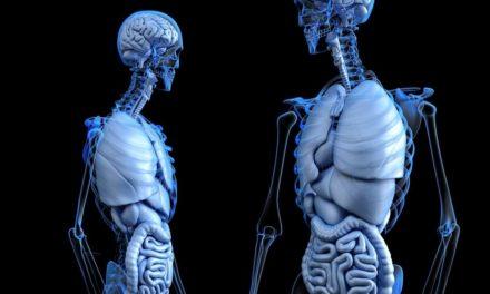 Hígado graso: qué es y qué riesgos entraña para la salud