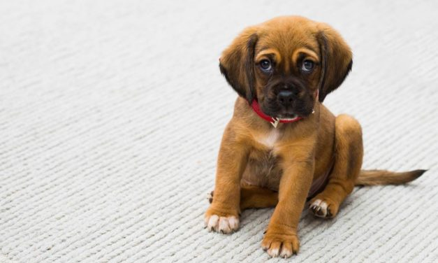 Por qué tu perro te pone ojitos: así se comunica mejor contigo
