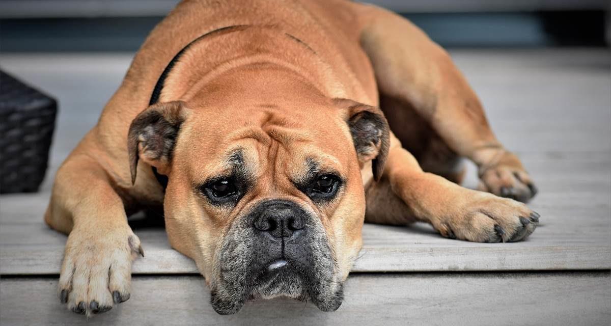 ¿Está mi mascota enfadada porque me he ido de vacaciones sin ella?