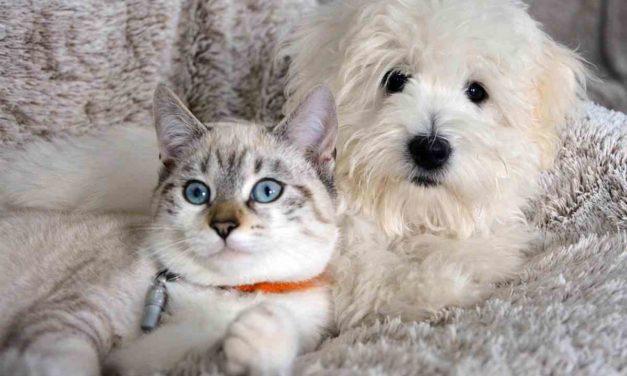 Gatos, perros o humanos, ¿quién manda en casa?