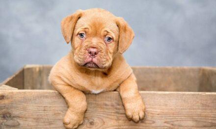 Cómo conseguir que tu cachorro no se haga pis en casa