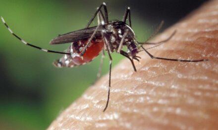 Actuaciones contra el mosquito tigre
