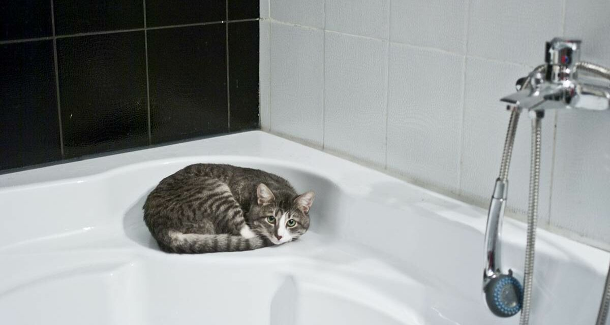 ¿Pensando en bañar a tu gato? No lo hagas