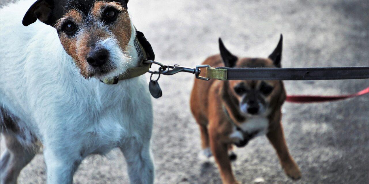 ¿Puedo sacar al perro? Dudas cotidianas sobre el COVID-19